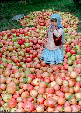 A cute little Iranian girl enjoying the pomegranate harvest.
